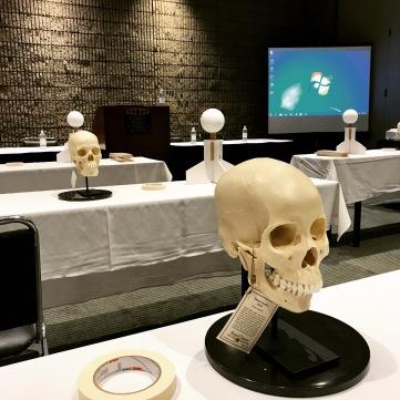 6 skulls, 9 artists, 8 hours.