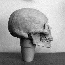 Sculptural study of Asian-derived female skull.
