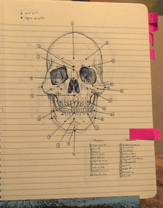 Sloppy first draft notes, referenced from Forensic Art & Illustration