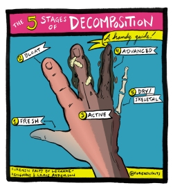 5 Stages of Decomposition
