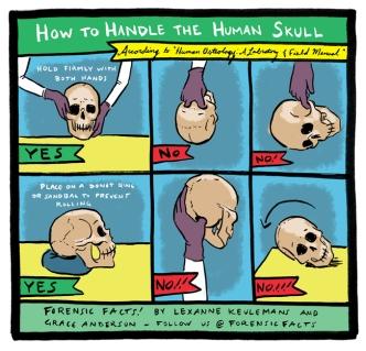Proper Handling of a Skull